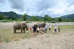 Tourists with elephants Stock Images