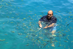 Tourist enjoy with feeding fish in a tropical sea at Phi Phi isl Royalty Free Stock Photo