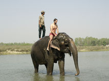 A tourist enjoying elephant bath Stock Photography