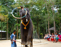 Tourist excursion, show of elephants, to Samui Royalty Free Stock Images