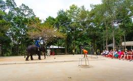 Tourist excursion, show of elephants, to Samui Royalty Free Stock Photo