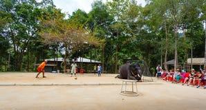 Tourist excursion, show of elephants, to Samui Stock Image