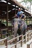 Tourist excursion, show of elephants, to Samui Royalty Free Stock Photos