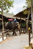 Tourist excursion, show of elephants, to Samui Stock Photo