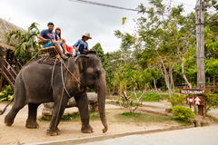 Tourist excursion, show of elephants, to Samui Stock Images