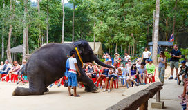 Tourist excursion, show of elephants, to Samui Stock Photography