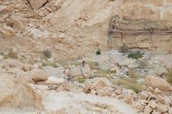 Tourist explores the wildlife of desert Stock Photos