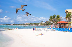 Tourist facilities and nature of Playa Del Carmen Royalty Free Stock Images