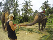 Tourist feeding banana and sugar cane for the elephant Chiang Mai Thailand. Royalty Free Stock Image