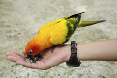 Tourist feeding bird Royalty Free Stock Image