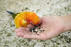Tourist feeding bird Stock Photos