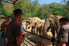Tourist feeding food for elephant Royalty Free Stock Images