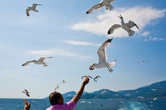 Tourist feeding seagulls Royalty Free Stock Photo