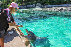 Tourist feeds dolphin Stock Images