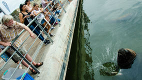Tourist feeds sea lion at a fishing dock Royalty Free Stock Image