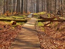 Tourist footpath in autumn forest. Stock Photography