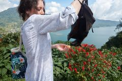 A tourist girl is photographed with a megabat. Flying fox or fruit bat on Bali, Indonesia