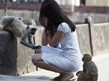 Tourist girl and two wild monkeys. Two wild monkeys touching tourist girl in an indian temple Royalty Free Stock Photography