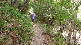 Tourist goes on a trail in the jungle stock footage
