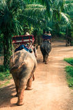 Tourist Group Rides Through the Jungle on the Backs of Elephants. Elephant Trekking Through Jungle in Northern Thailand royalty free stock photo