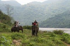 Tourist group rides through the jungle on the backs of elephants. Laos. Luang Prabang. - 15 January 2019 royalty free stock image