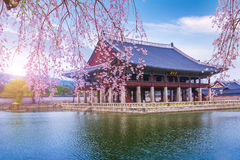 Tourist and gyeongbokgung palace in spring South Korea. Royalty Free Stock Photo