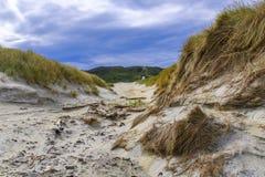Sandfly Beach near Dunedin, New Zealand. Tourist hike at the Sandfly Beach near Dunedin, New Zealand stock photos