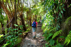 Tourist hiking on Kilauea Iki trail in Volcanoes National Park in Big Island of Hawaii. Trail leads through lush rain forest along the rim of Kilauea Iki and Stock Photos