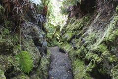 Kilauea Iki lush jungle trail in Volcanoes National Park, Big Island, Hawaii. Tourist hiking on Kilauea Iki trail in Volcanoes National Park in Big Island of Stock Image