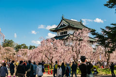 Tourist at the Hirosaki Castle Park Royalty Free Stock Photo