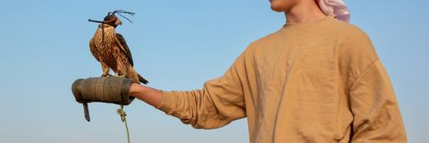 Tourist holding a falcon with a leather hood. Falconry show in the desert near Dubai, UAE. Tourist holding a falcon with a leather hood. Falconry show in the stock images