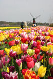 Tourist in Holland. Easter weekend brings a lot of tourist to Holland for the famous flowers Royalty Free Stock Images