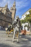 Beautiful cities of Spain to travel, Seville in the Andalusia region. Tourist horse next to the giralda stock images