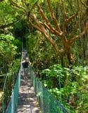 Tourist on a jungle bridge royalty free stock photo