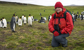 Tourist with King Penguins - Falkland Islands. Adventure tourist at a King Penguin colony in the Falkland Islands (Aptenodytes patagonica Royalty Free Stock Photos