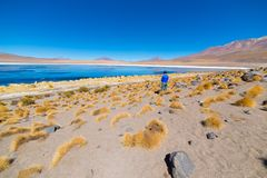 Tourist at `Laguna Honda`, a frozen salt lake with flamingos on the way to the famous Uyuni Salt Flat, travel destination in Boliv. Ia. Wide angle view with Royalty Free Stock Photo