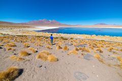 Tourist at `Laguna Honda`, a frozen salt lake with flamingos on the way to the famous Uyuni Salt Flat, travel destination in Boliv. Ia. Wide angle view with Royalty Free Stock Image
