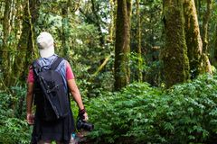 Tourist looking at  rain forest. Tourist explorer with backpack and camera looking at great green rain forest national park of Doi Intanond, Chiangmai, Thailand Stock Image