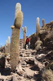 Tourist man at Island with Cactuses in Uyuni, Bolivia Stock Images