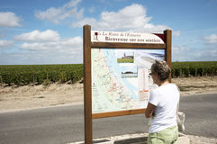 Tourist map and vines in French wine region royalty free stock image