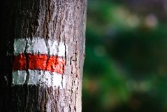 Tourist mark on a tree Royalty Free Stock Photography