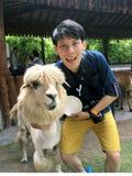 Tourist mit Alpaka Lizenzfreie Stockbilder