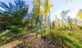 Tourist mit einem Rucksack gehend durch den Wald mit Felsen Stockfoto