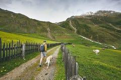 Tourist mit Hund in der Landschaft Stockfotografie
