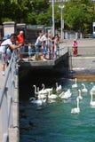 Tourist mit Schwan, Zürich Lizenzfreie Stockbilder
