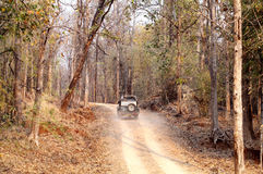 Tourist moving in Safari jeep in Pench Tiger reserve. SEONI, INDIA-JUNE 26: Tourist moving in Safari jeep during game drive in Pench Tiger Reserve, Seoni, India royalty free stock images