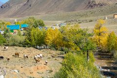 Tourist Parking Mars 1. Tourist Parking Mars1 in the valley of the river Kyzyl-Chin, Altai Republic stock images