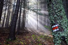 Tourist patch in forest with sunrise. royalty free stock photo
