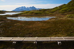 Swamps in norwegian mountains Royalty Free Stock Image