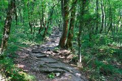 Tourist path on the ascent to mountain covered with forest Royalty Free Stock Image